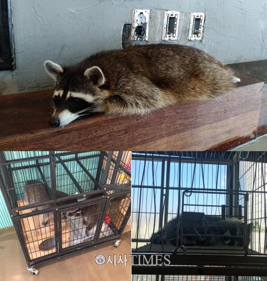 서울시내 야생동물카페, 동물학대·공중보건 '빨간불'