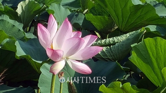 유라시아에서 들려주는 사랑과 모험, 평화이야기 (110)